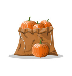 orange pumpkin vegetable in canvas bag vector image
