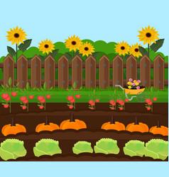 pumpkin harvest garden countryside vector image