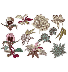 collection of high detailed flowers for design vector image