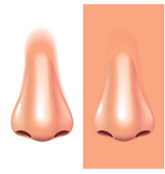 Nose isolated on white photo-realistic vector