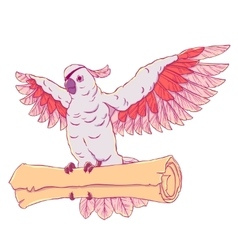 Pirate parrot in flight with outstretched wings vector