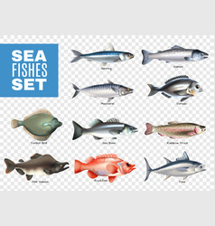 sea fishes transparent set vector image