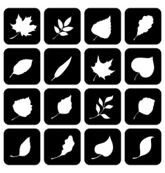 set of square icons with various leaves vector image