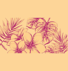 tropic flowers summer background line art vintage vector image