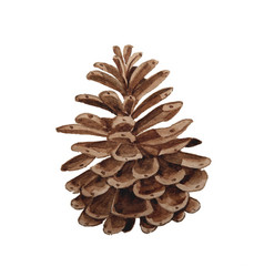 Watercolor pine cone for decoration hand drawn vector
