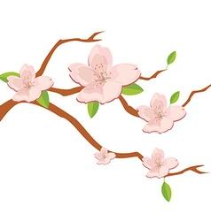 Branch of sakura flowers vector image