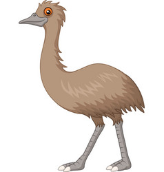 Cartoon emu isolated on white background vector