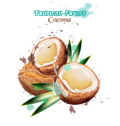 coconut fruits watercolor delicious vector image