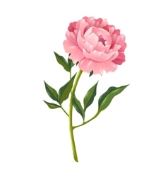 Peony Realistic vector image