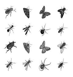 an insect arthropod an osa a spider a cockroach vector image
