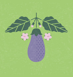Eggplant with leaves and flowers vector