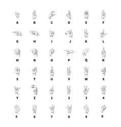 Sign language interpreter latin alphabet vector image