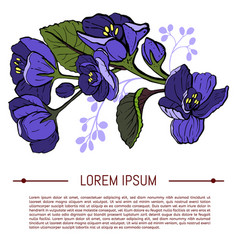 viola odorata sweet violets on white background vector image