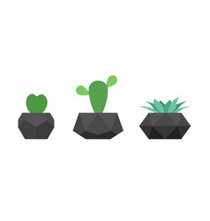 cactus and succulent flowers in trendy black vector image