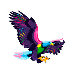 flying bald eagle from multicolored paints splash vector image