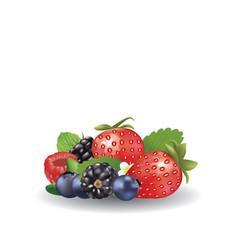 forest fruits set vector image