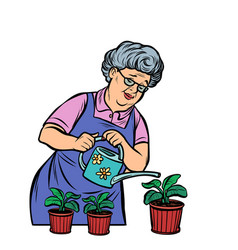old woman watering potted flowers vector image