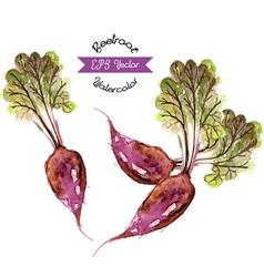 Organic beetroot watercolor vector