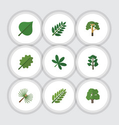Flat icon nature set of decoration tree leaves vector