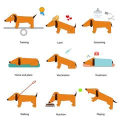cartoon caring for dog set vector image