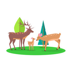Deer family in woods isolated cartoon vector
