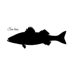 Silhouette of sea bass vector