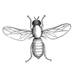Window fly vintage vector