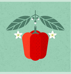 bell pepper with leaves and flowers vector image