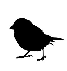 Sparrow silhouette isolated vector