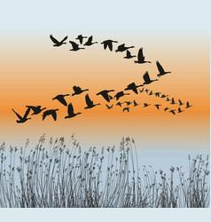 Spring goose migration vector