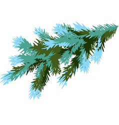 winter spruce branch isolated on white background vector image