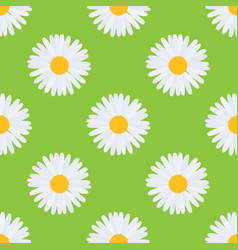 daisy chamomile flower seamless pattern vector image
