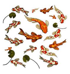 Fish carp koi colorful set vector