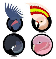 logo parrot vector image