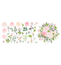 Set floral branch flower pink rose green vector
