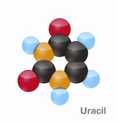 Uracil u pyrimidine nucleobase molecule present vector