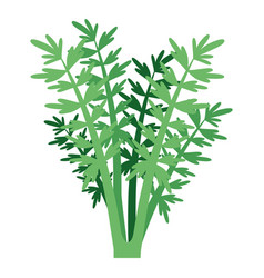 white background with carrot plant vector image