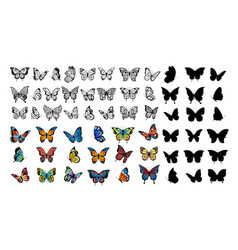 butterfly collection drawing butterflies vector image