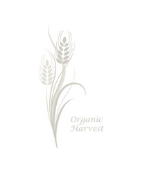 Gray wheat spikelet on a white isolated background vector