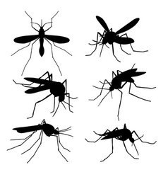 Closeup mosquito silhouettes isolated flying vector