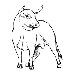 Freehand sketch bull vector