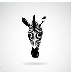 zebra face on white background wild animals vector image