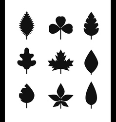 Different leaf silhouettes collection vector
