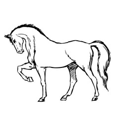 Freehand sketch of horse vector