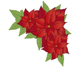 Poinsettia flower vector