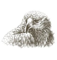 wild bird vector image