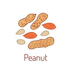 peanuts hand drawn vector image