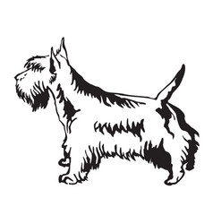 Decorative standing portrait of scottish terrier vector