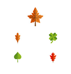 Flat icon maple set of linden leafage hickory vector