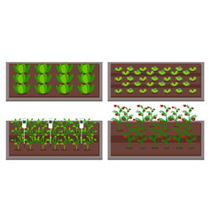 Growing vegetables using modern technology use vector